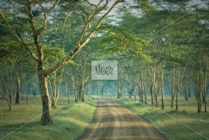 3475893_P_the-road-in-mysterious-forest