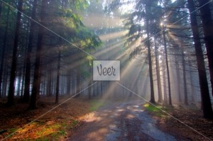 3615863_P_God-beams-coniferous-forest-in